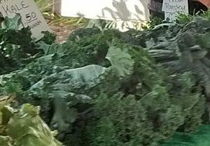 kale in season